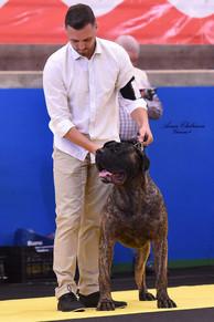 Best Presa Canario breeder
