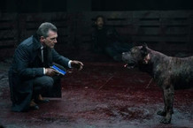 Han Solo the Bullet Head Dog with Antonio Banderas