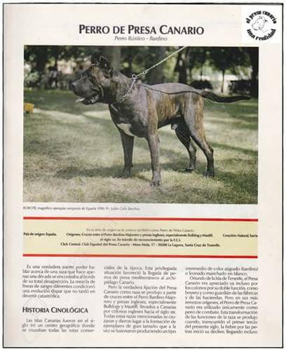 Perro de Presa Canario historical article