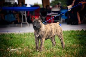 Shera 3 months