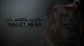 Han Solo the Bullet Head Dog