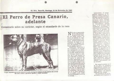old article about Presa Canario