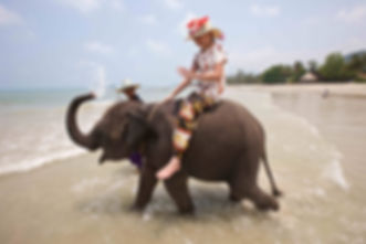 Elephant on the beach in Thailand