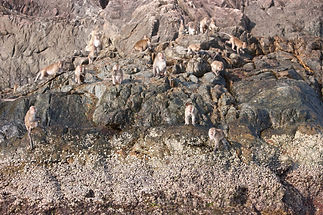 Monkeys on a rocky shore , Koh Chang Thailand