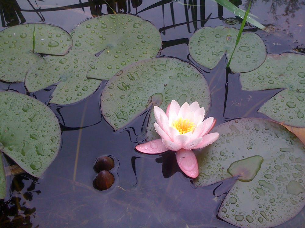 lilia.jpg