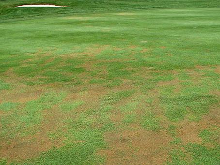 Golf Course Summer Stress