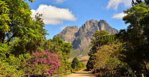 Tradescope visits South Africa's produce-packed Western Cape