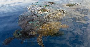 'Ghost fishing' is a nightmare