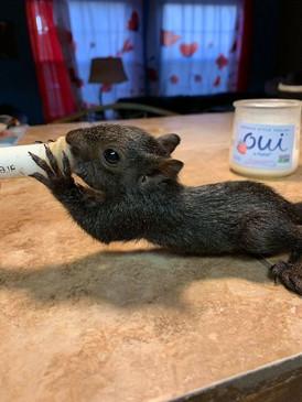 Baby Black Squirrel