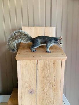 Roxy the Squirrel