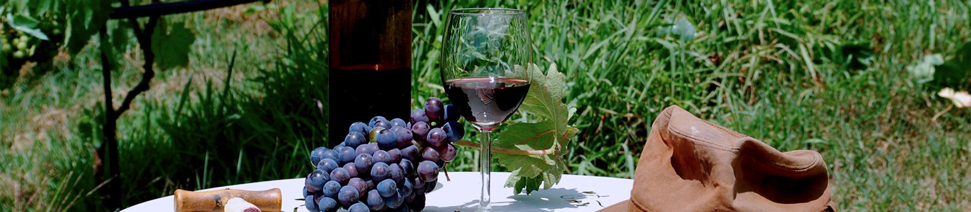 vino_banner.jpg