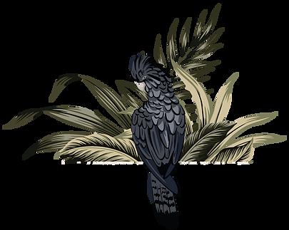 perroquet-noir_2.png