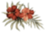 feuillage_HIBISCUS.png