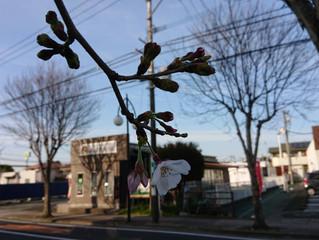 桜の開花のこの時期は・・・