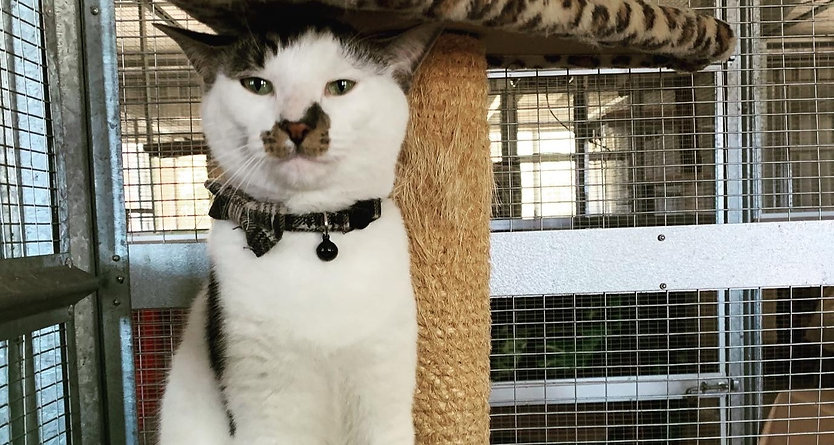 Feline 5 Star Luxury Cat Accommodation Cat in Luxury Baldivis Cattery Rockingham Cattery Perth Catte