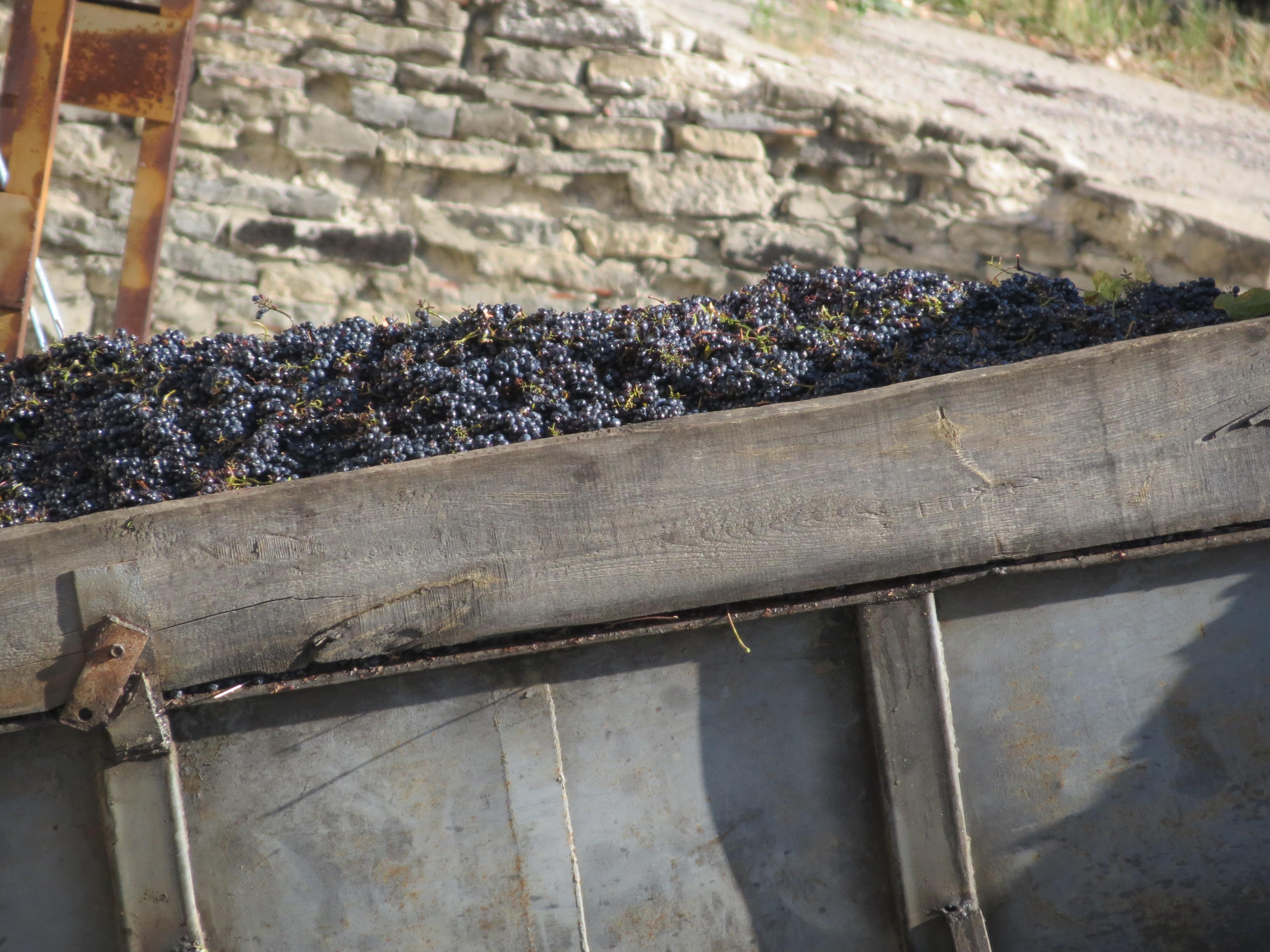 Garling Winery Sept 24 2014
