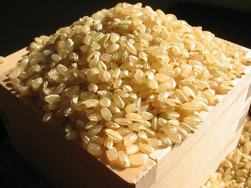 無農薬 有機栽培 玄米5kg