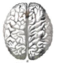 BrainHemispheres%400_edited.jpg