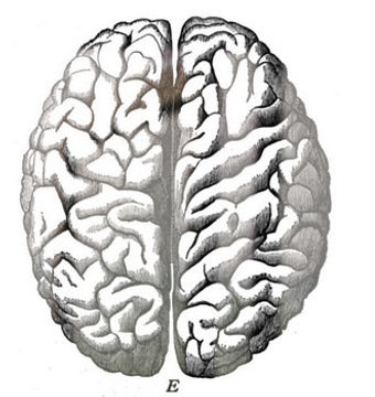 BrainHemispheres%400_edited.jpg