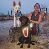 Teaching dogs to hike
