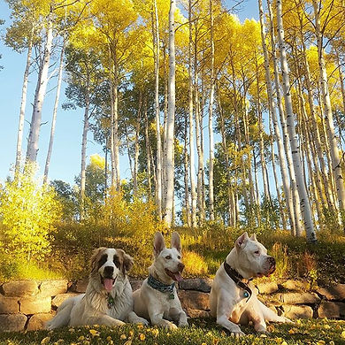 The three autumn pup-kateers 🍁🍂🍃 #tel