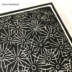 MegaLilyDesign Alium Seedhead Linocut Print