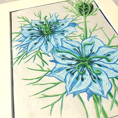 Love In A Mist (Blue)
