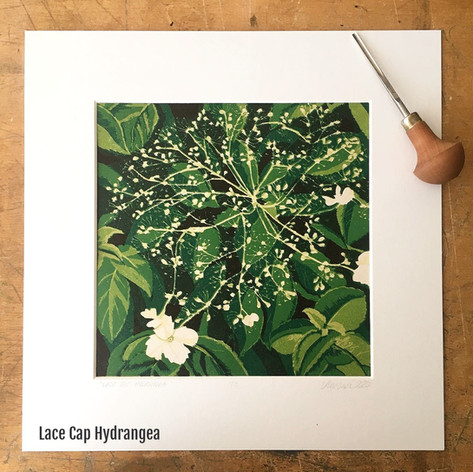 MegaLilyDesign Lace Cap Hydrangea Linocut Print