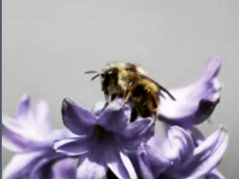 Five great reasons why Honey is one of my favorite tools, especially around this time of the year.
