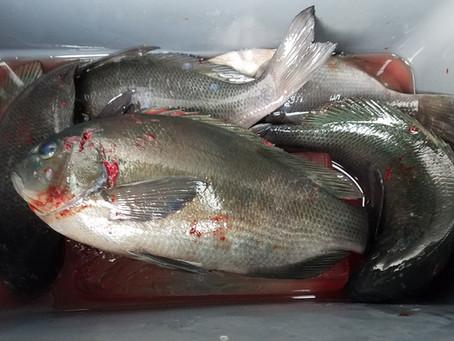 松田ウキで沈め釣り『松遠』で試してみました!