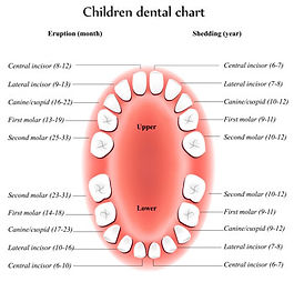tooth-eruption-chart.jpg