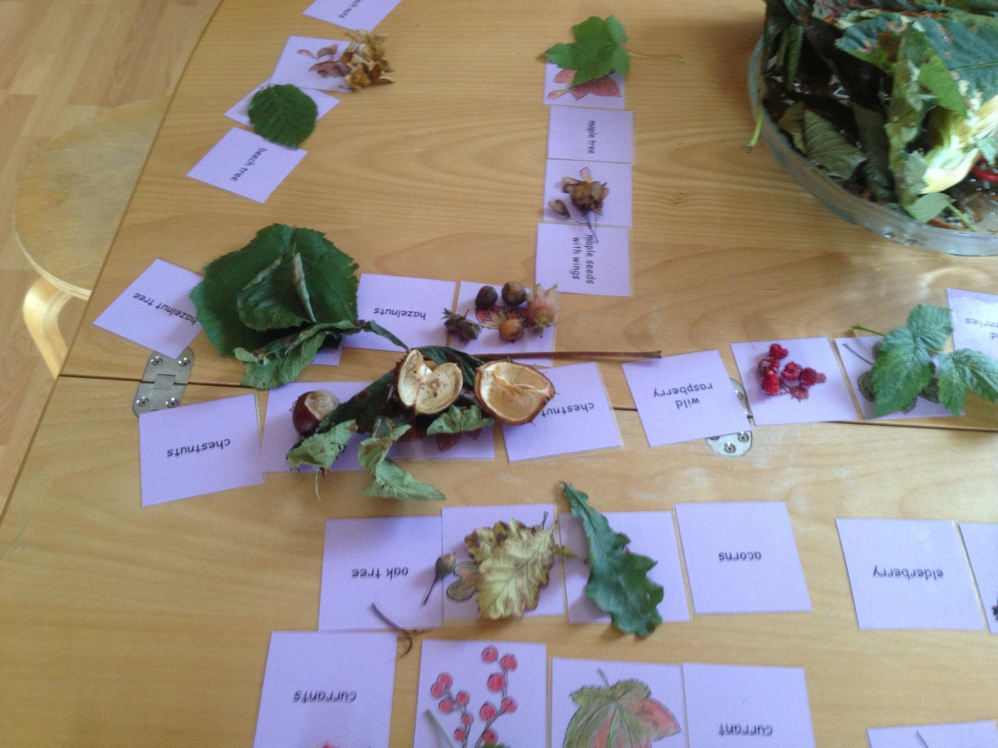 Gegenstände aus dem Wald benennen lernen