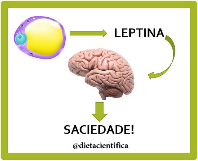 Sobre leptina e saciedade