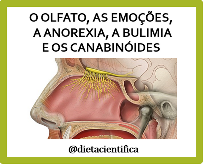 Sobre olfato, emoções e canabinóides - Smell, emotions and cannabinoids
