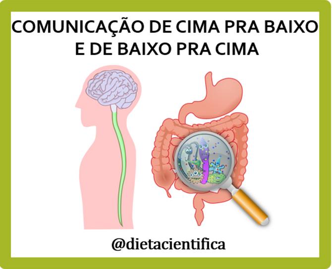 A comunicação cérebro-intestino