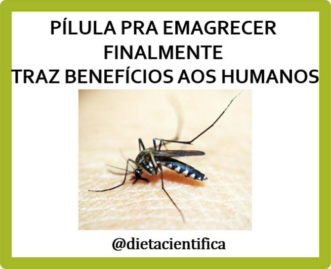 Pílula pra emagrecer finalmente traz benefícios/Diet pills finally bring benefits to humans