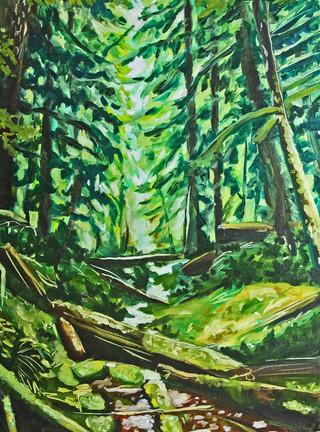PNW Forest_Katie Smith.jpg