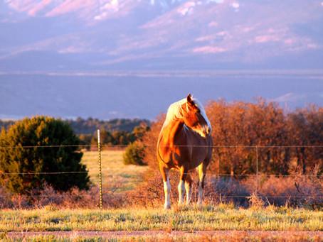 Colorado Photography part 1