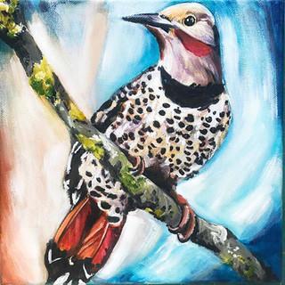 flicker woodpecker_web.jpg