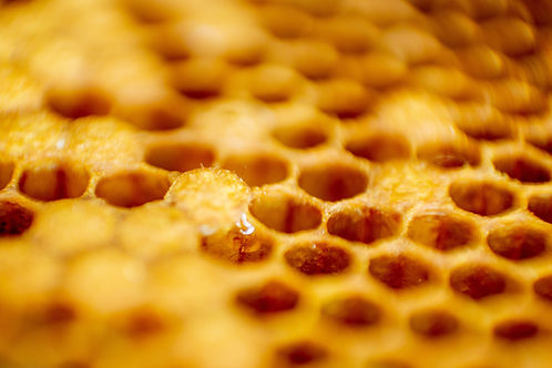 Macro photo of a bee hive on a honeycomb