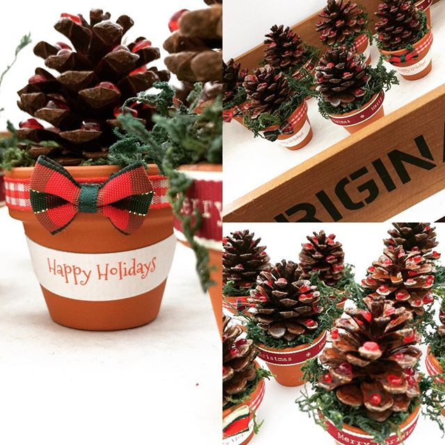 Mini Christmas Pinecone Pots