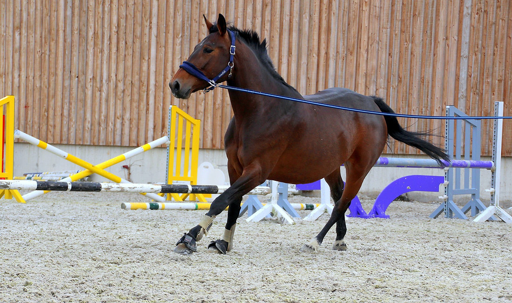 Looking top the outside on the lunge may indicate a stiffness in the cervical spine (neck)