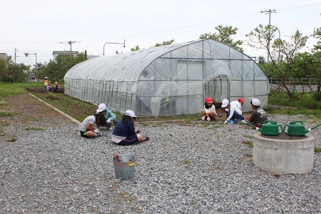 知小2018-ハウスの中と外に苗を植えます。