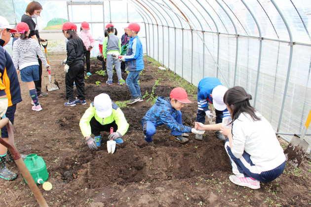 知小2018-ハウスの中にも苗を植えます。