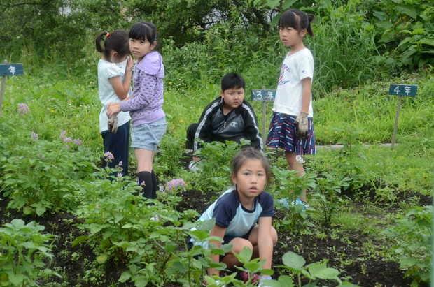 知小2018-雑草を熱心に取る子供たち