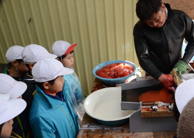 知小2018-3年生のサケ採卵見学