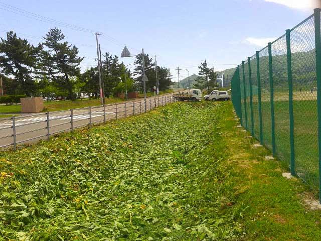 知小2018-きれいに雑草が刈られたグラウンド脇の法面