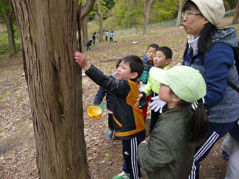知小2018-セミの抜け殻を宝物のように集める子供たち
