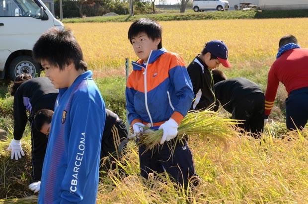 知小2018-稲刈り体験