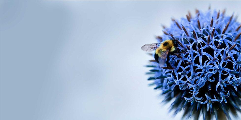L.3-bee-blue.jpg